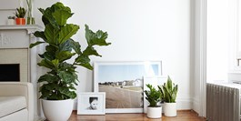 Top 10 Houseplant Care Tips