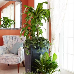 Houseplant Basics