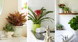 Grow Trendy Bathroom Plants