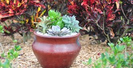 Container Gardening Ideas with Succulents