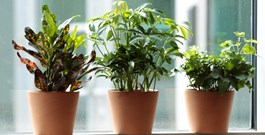 10 Things to Know as a New Houseplant Owner