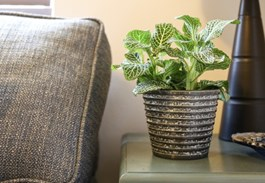 Design Inspiration -- Using Small Plants