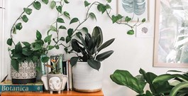 5 Tips for Houseplant First Timers