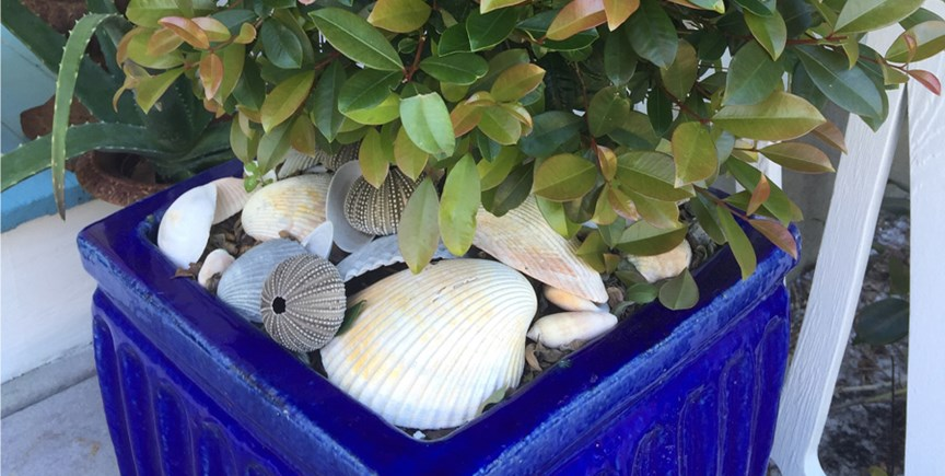 Mulch Containers with Shells