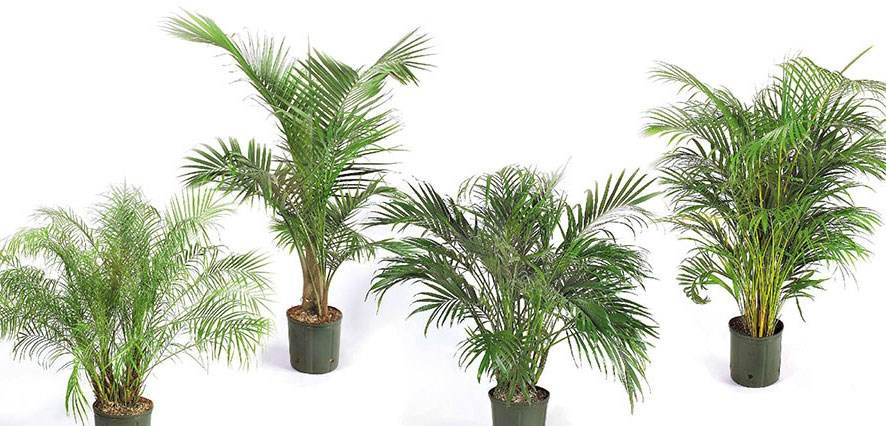 house plant identification guide by picture - House Plant Identification Guide By Picture