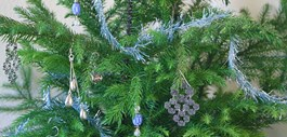 Celebrate the Seasons with a Norfolk Island Pine