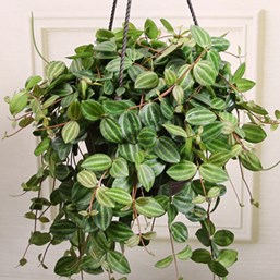 Image Result For Exotic Angel Plant