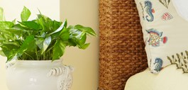 Breathe Easier with Indoor Plants