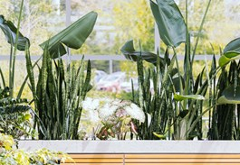 Take Your Snake Plant Outside