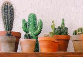 How to Cluster Cacti