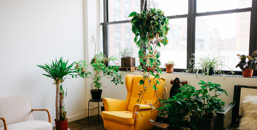 Houseplants That Climb And Trail Costa Farms