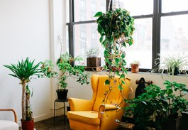 Houseplants That Climb and Trail