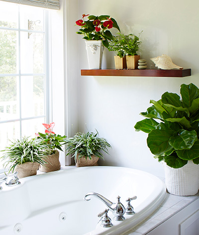 12 things you did not know about houseplants costa farms - Houseplants for the bathroom ...