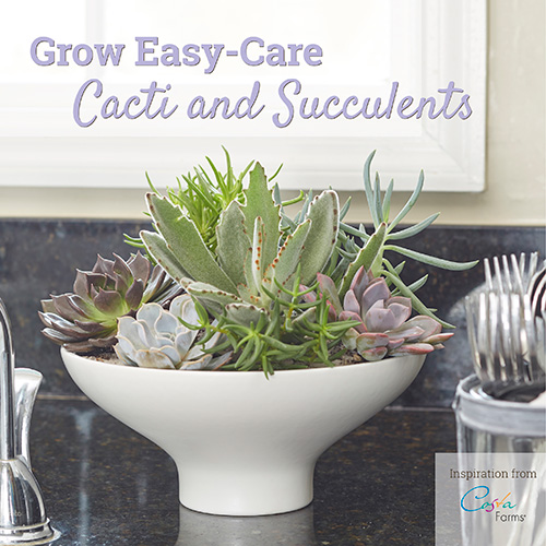Costa Farms Cacti and Succulent Book