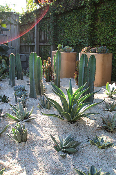 Desert Escape Cactus and Succulent Garden