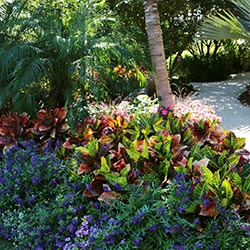 South Florida Flower Garden Flowers Healthy - Florida-gardening-ideas