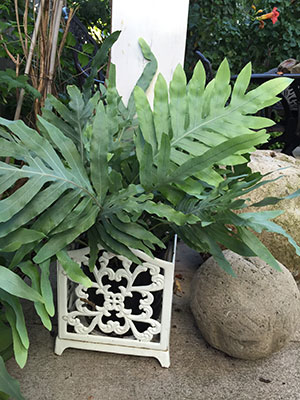 Houseplant fern in outdoor planter
