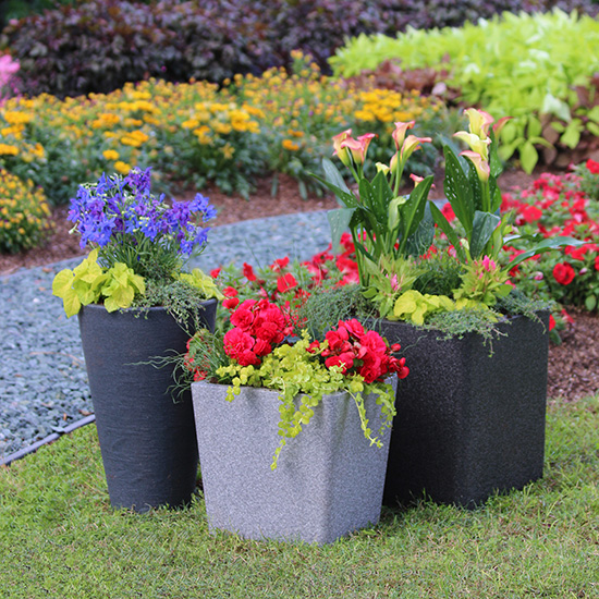 Cool Container Gardens from the Costa Farms Team Costa Farms