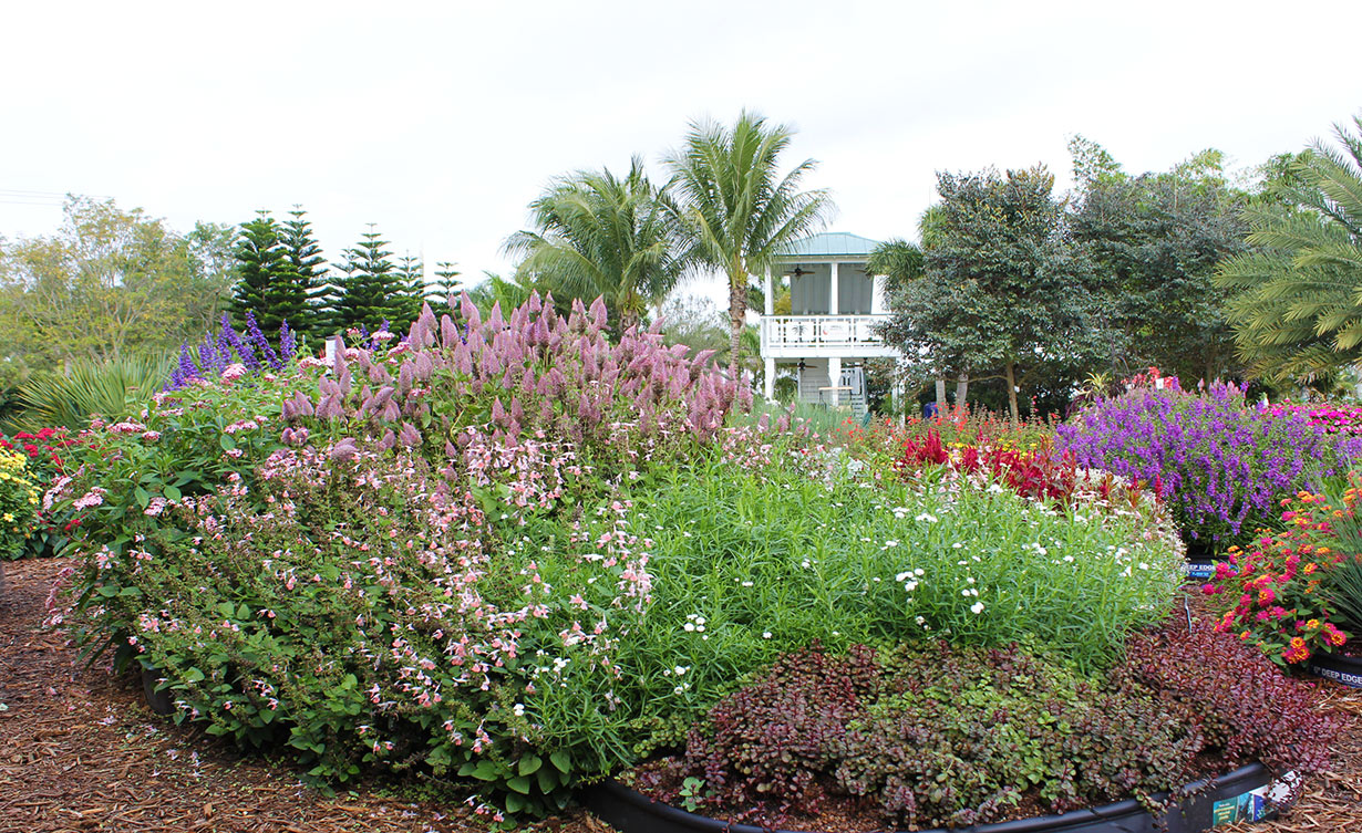 easy care garden ideas costa farms