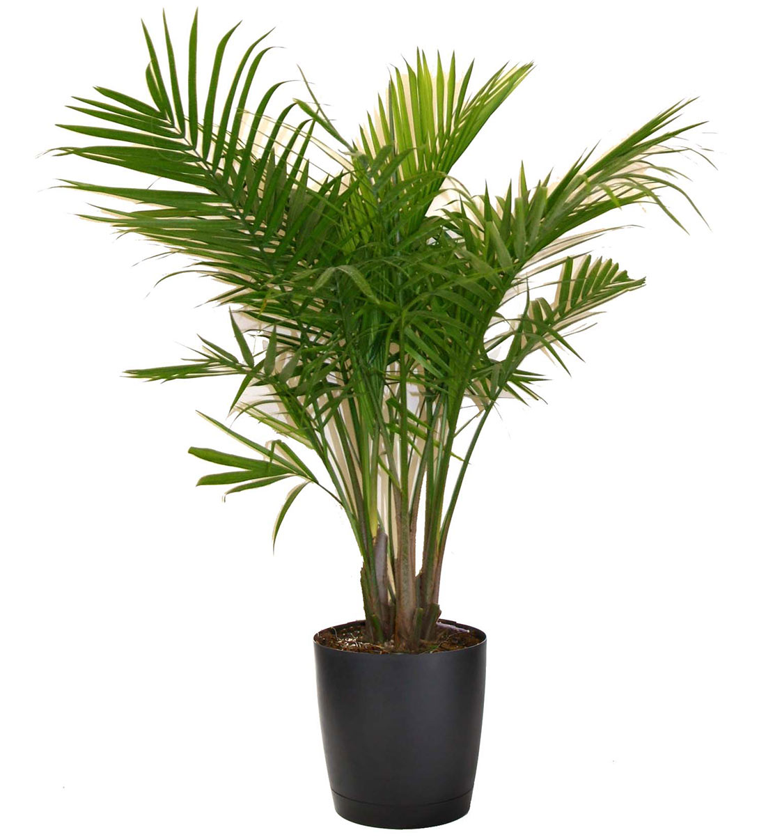 Most popular houseplants costa farms Images of indoor plants