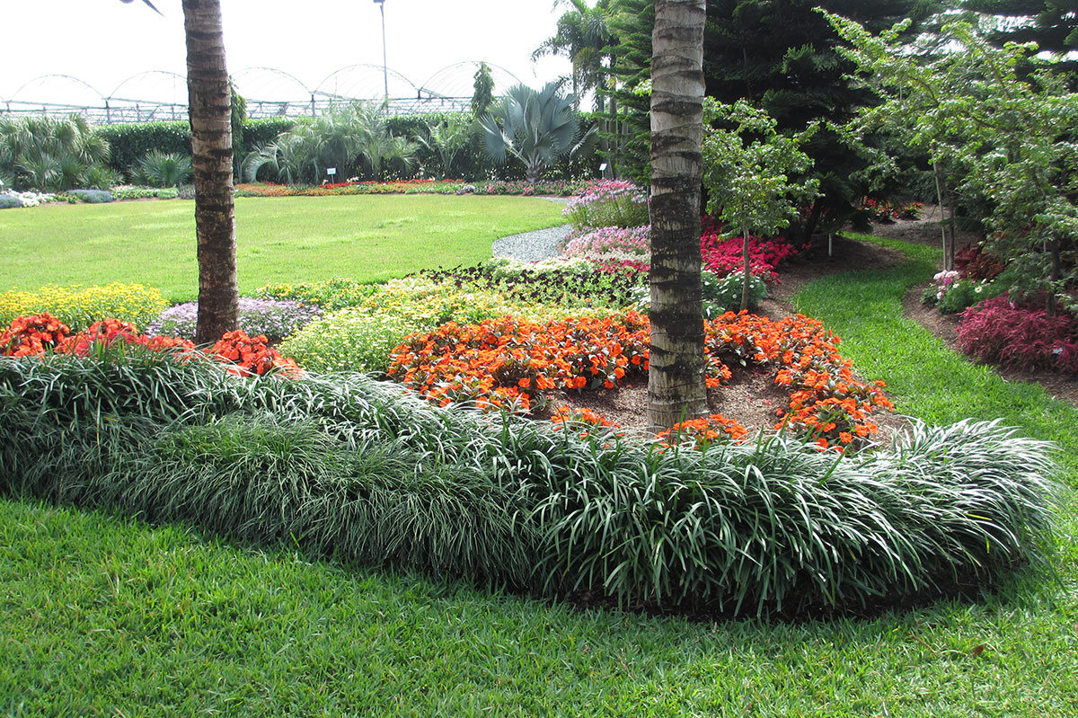 create a carpet of color in your yard with groundcovers  costa farms, Natural flower