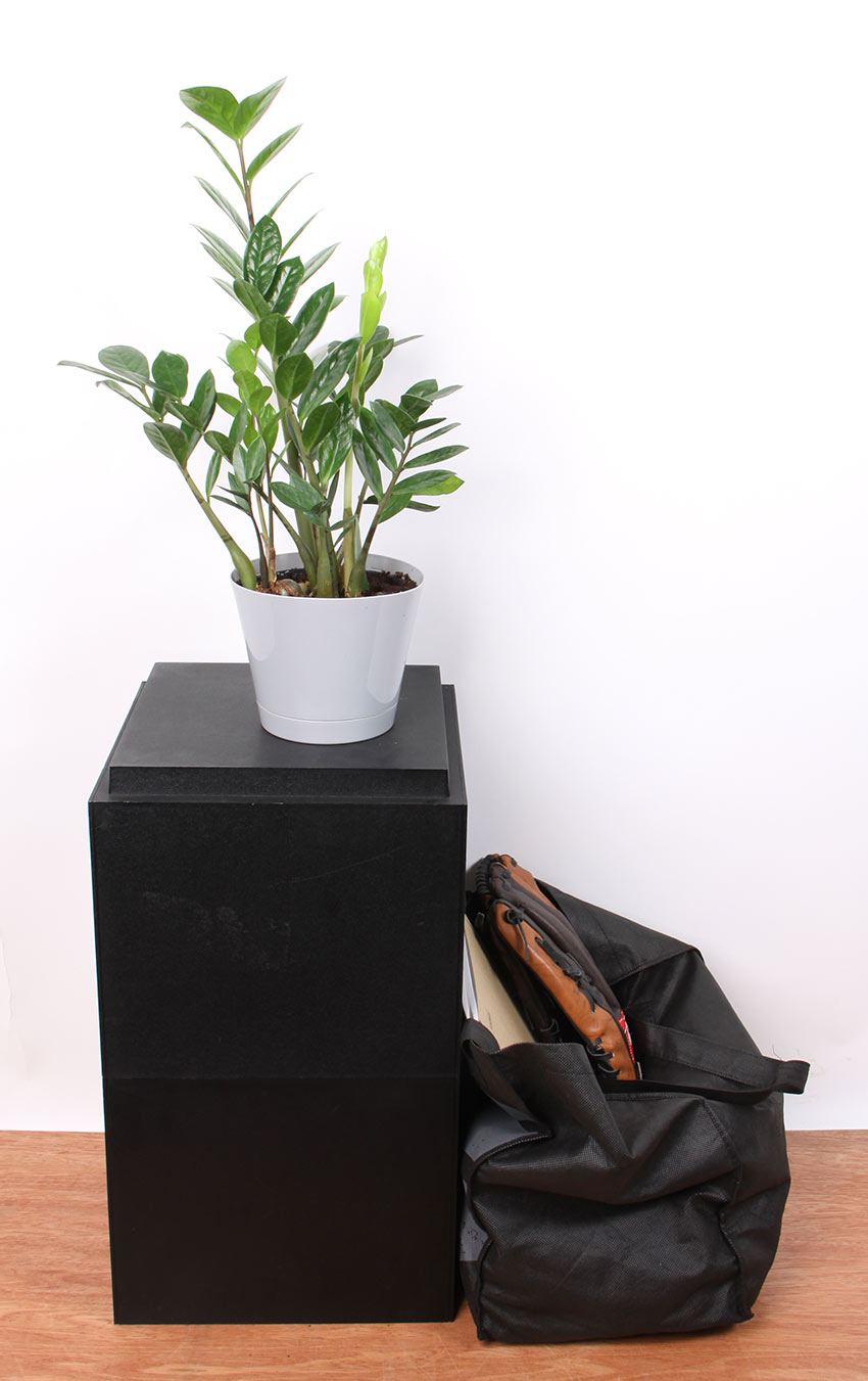 Top Plants For College Students Costa Farms