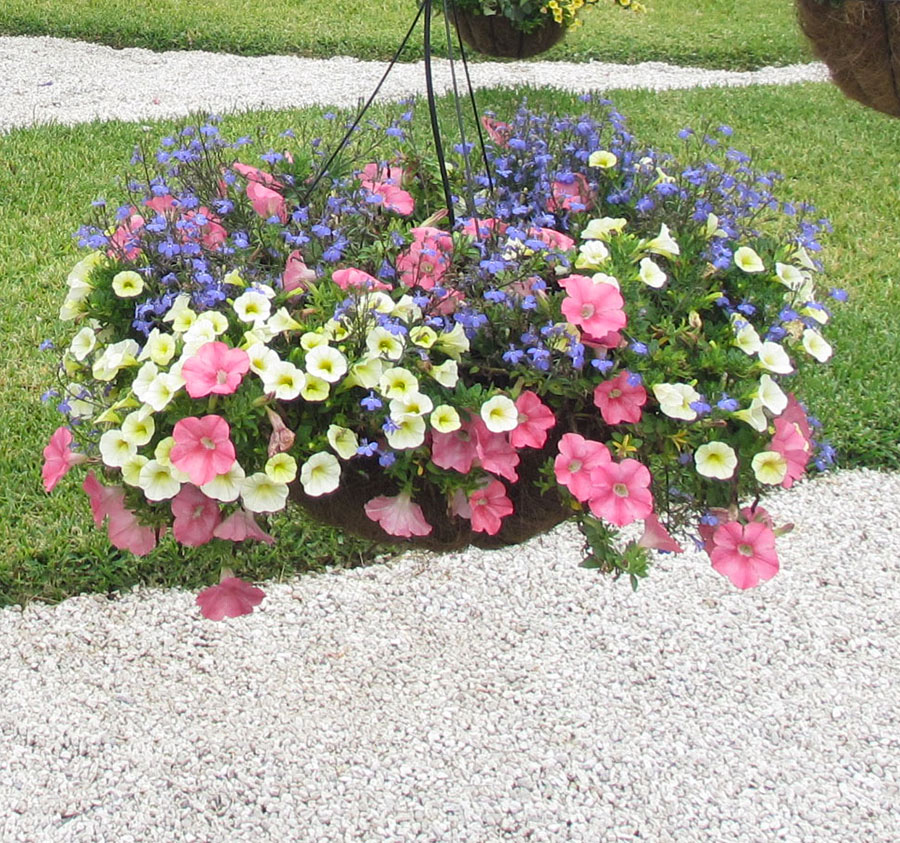 Hanging Baskets Ideas Costa Farms