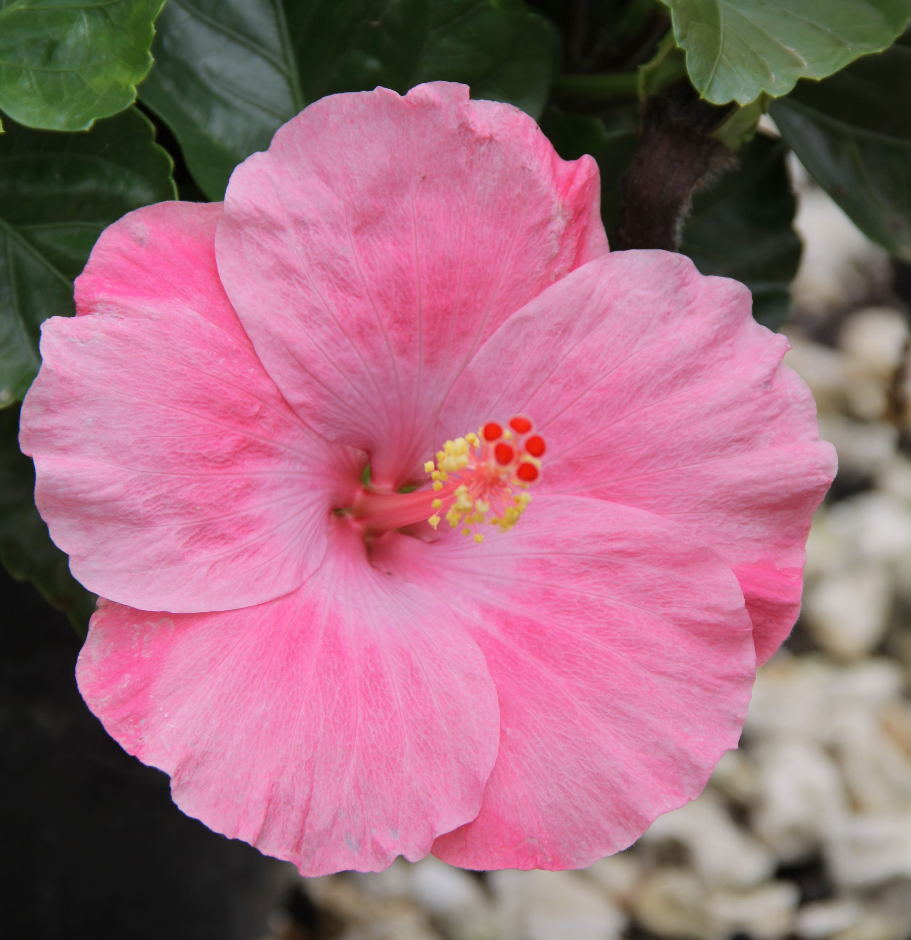 Hot plants for bold color all summer long costa farms for Tye dye flowers