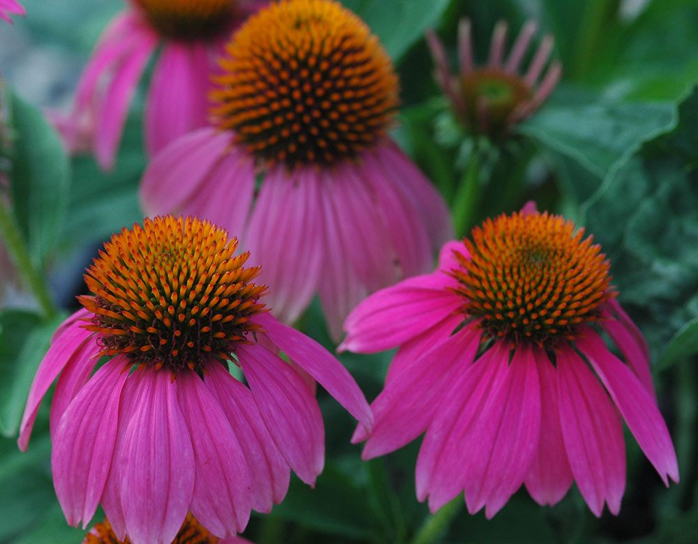 Top Plants To Attract Butterflies To Your Garden Costa Farms