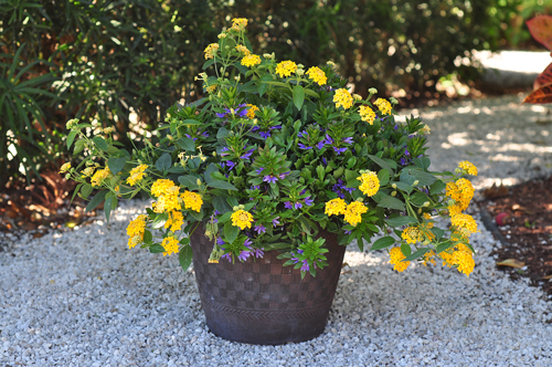 Container Garden Ideas if you forget to water your plants due to a busy schedule check out some 10 Butterfly Breakfast