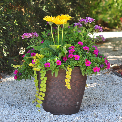 11 Easy Colorful Container Garden Ideas Costa Farms