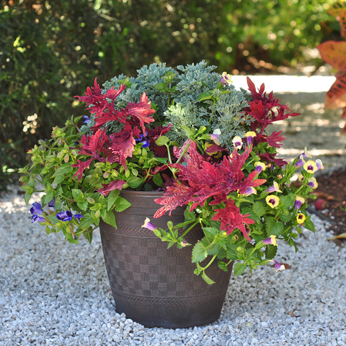 Costa Farms : outdoor potted flowers - startupinsights.org