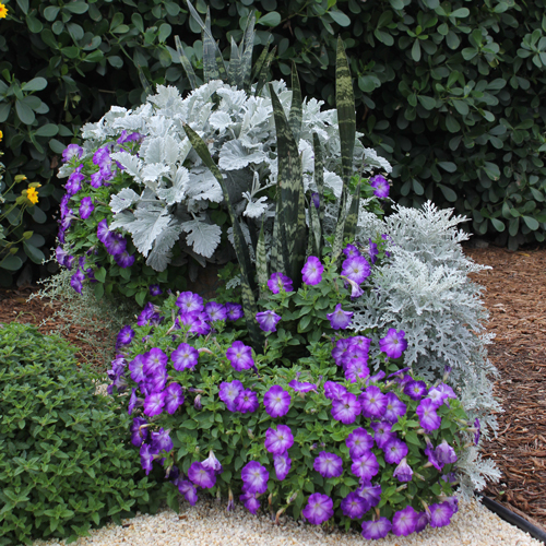 easy colorful container garden ideas  costa farms, Beautiful flower