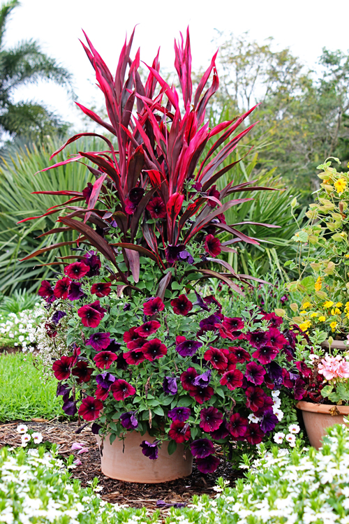 Container Garden Design Ideas stunning container garden ideas for landscape tropical design ideas with stunning annuals bold color 6 Celebrate Summer