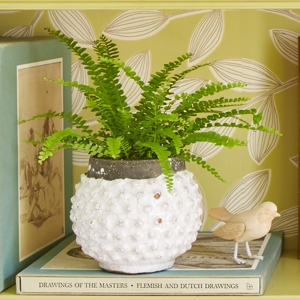 Spring Never Ends With Indoor Ferns Costa Farms