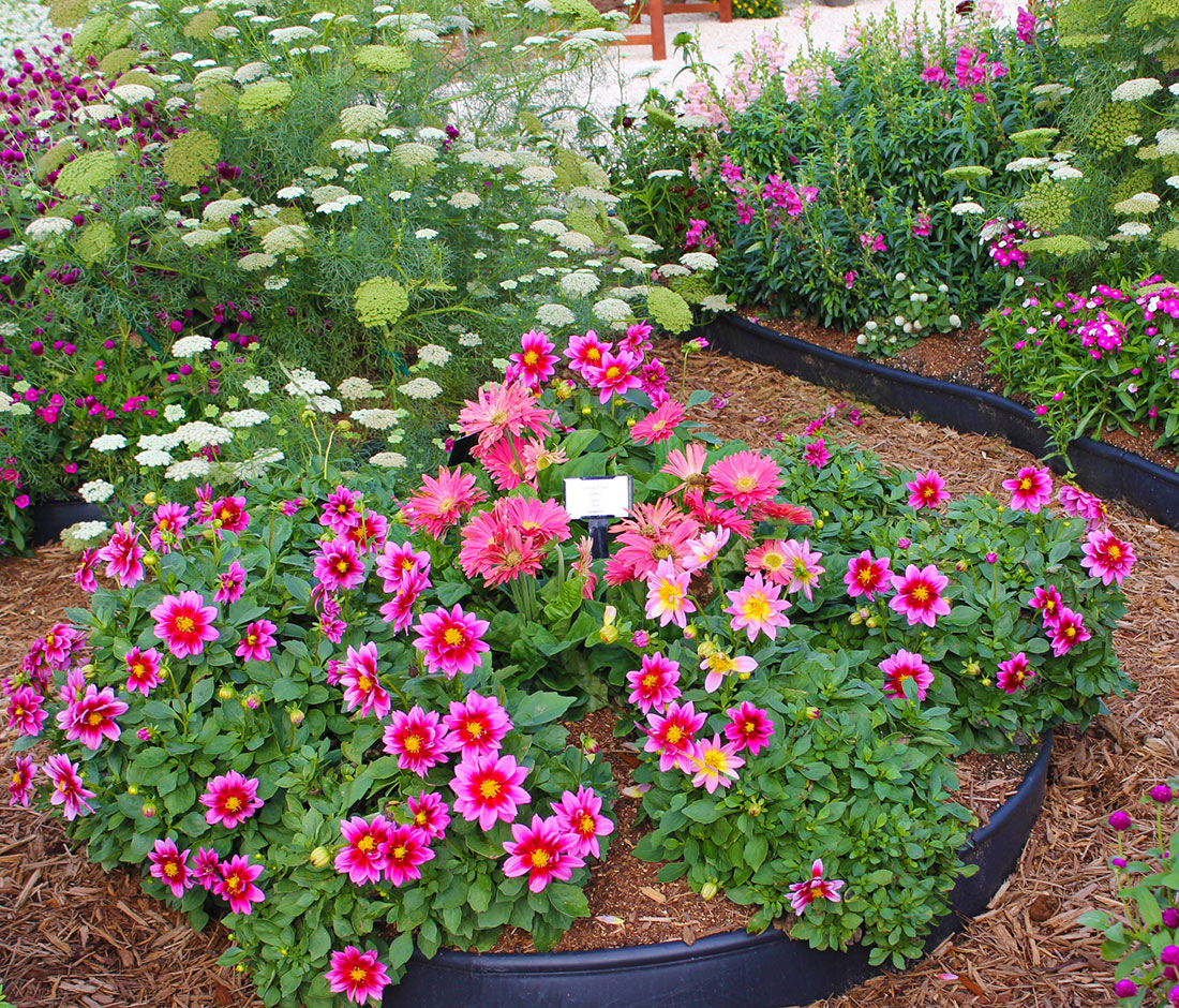Backyard Flower Garden Ideas: Small Space Cut Flower Garden Ideas