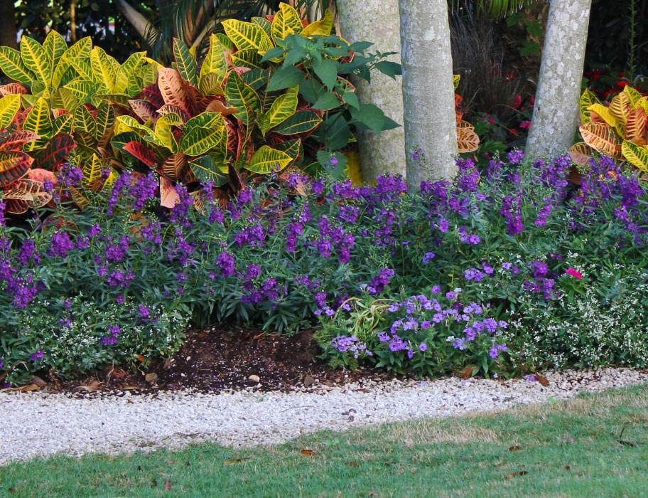 15 best flowers for summer costa farms angelonia mightylinksfo