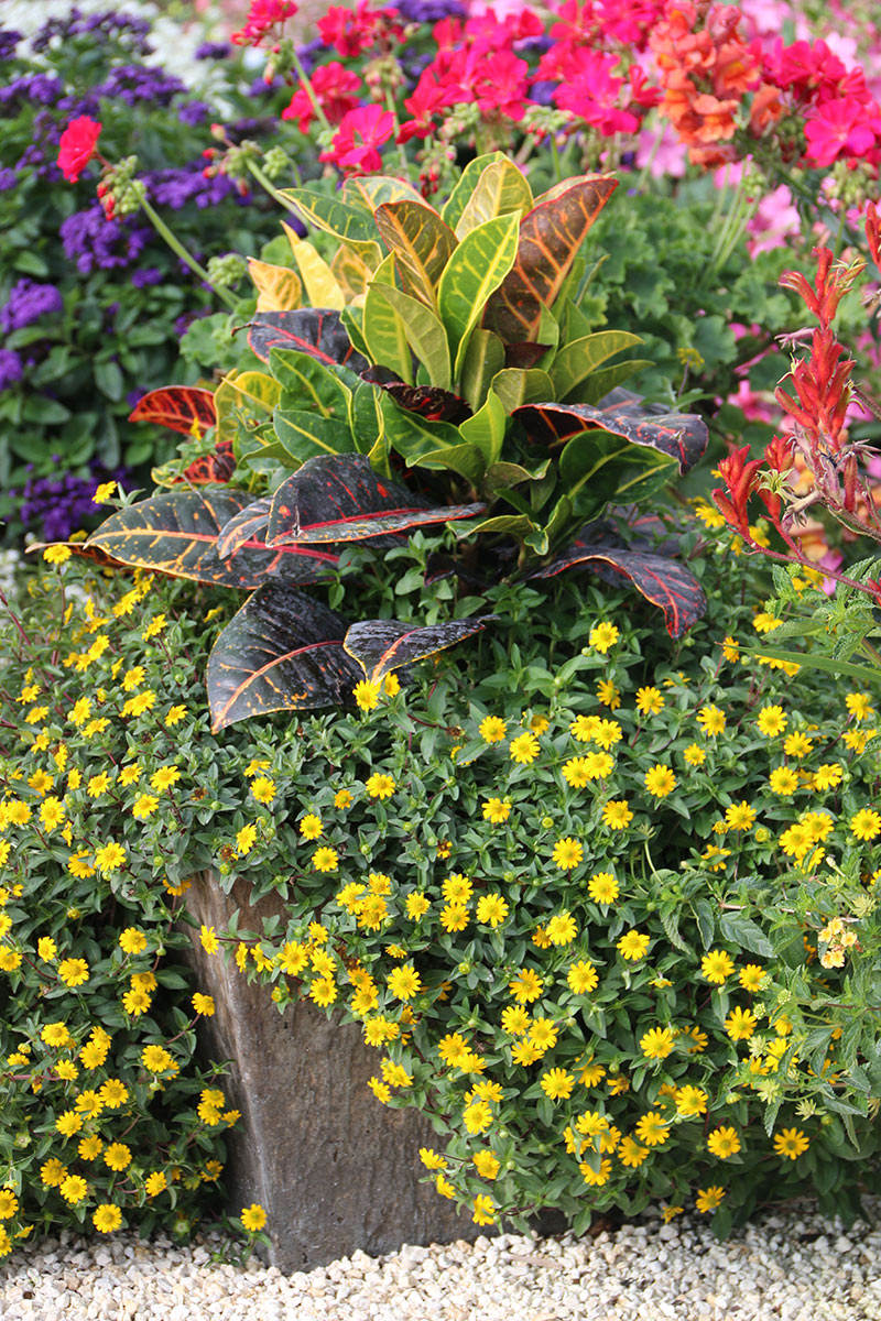 Container combo ideas from costa farms costa farms mix in variegated foliage izmirmasajfo