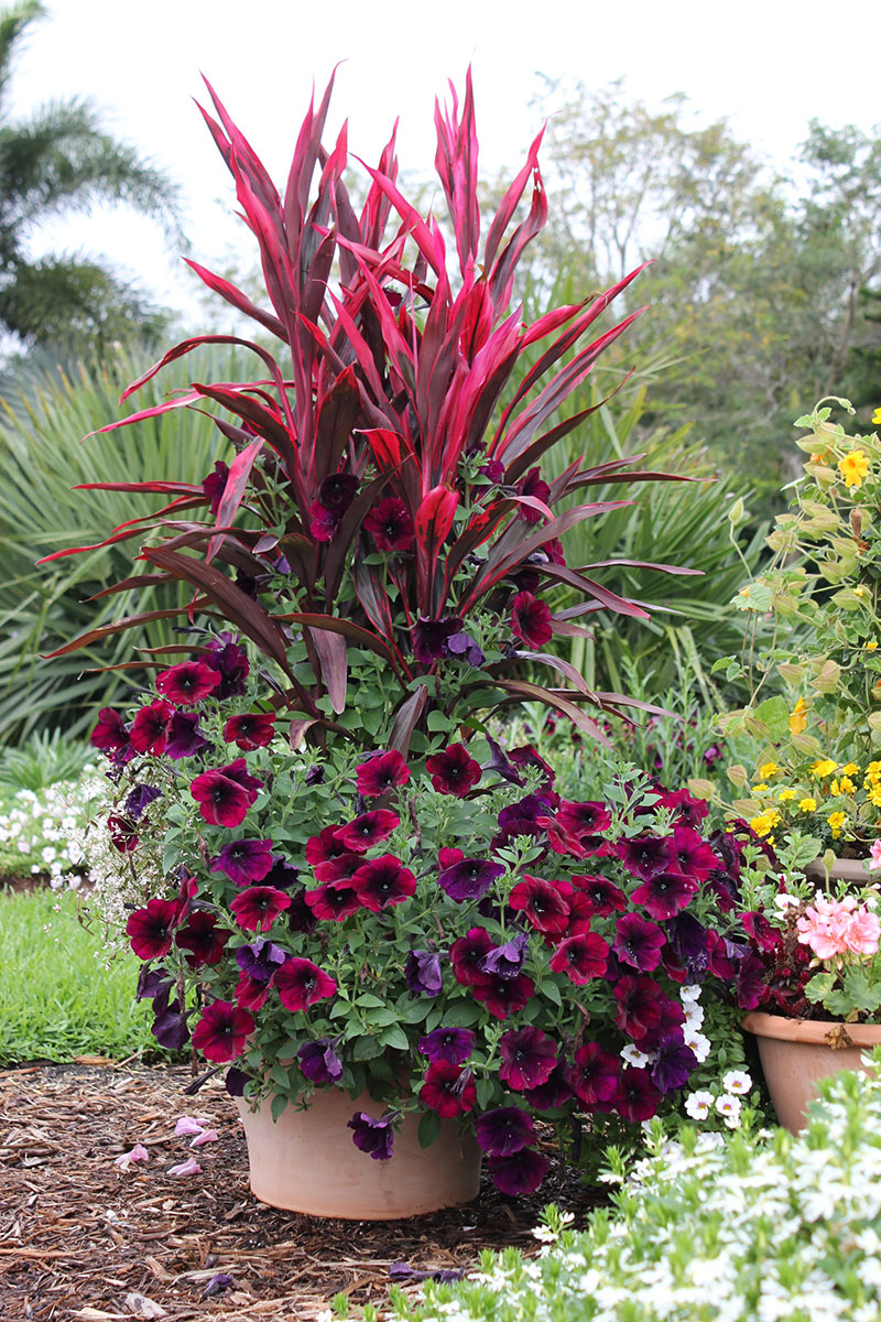 Flower pot ideas for full sun images for Outdoor planter ideas