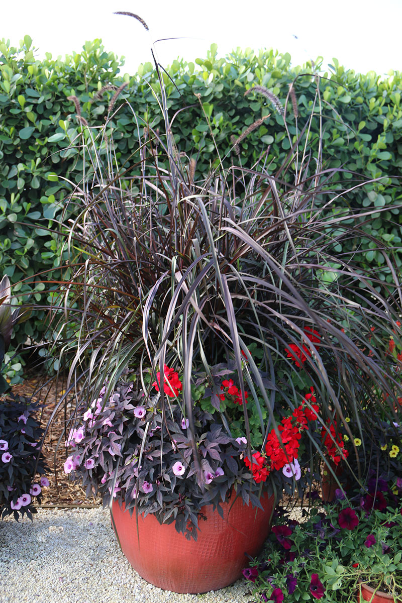 Container gardening ideas for full sun - Consider Your Container