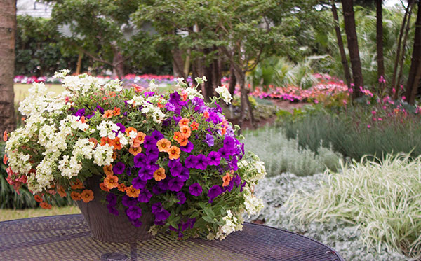 10 Tips for Container Garden Design Costa Farms