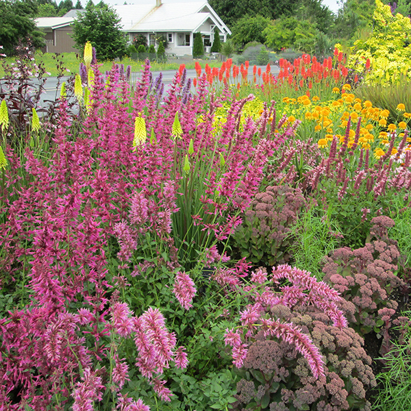10 Design Tips For A Perfect Perennial Border Costa Farms