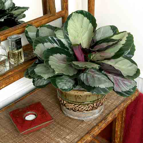 Low Light Flowering House Plants 10 best low-light houseplants | costa farms