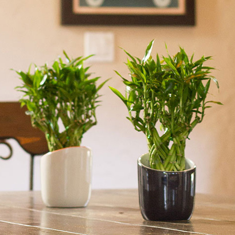 10 best low light houseplants costa farms for Low water indoor plants