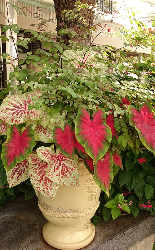 Take Note of Textures Tropical shade plants