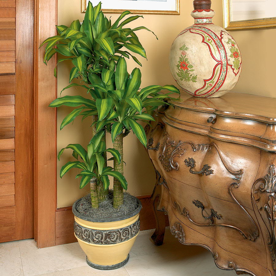 Decorate with Dracaena | Costa Farms on brown decor ideas, brown before and after, brown lashes, brown concrete, brown artificial nails, brown italian shoes, brown tablescapes, brown examples, brown template, brown hair, brown swatches, brown styles, brown extensions, brown pedicure, brown ends, brown streaks, brown low lights, brown french nails, brown in italian, brown modern house,