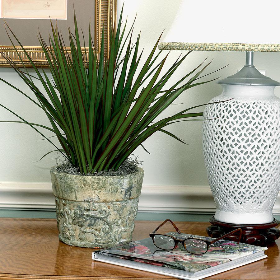 Marginata dracaena - a worthy decoration for home and office 98