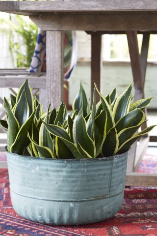 10 Best Low Water Houseplants Costa Farms