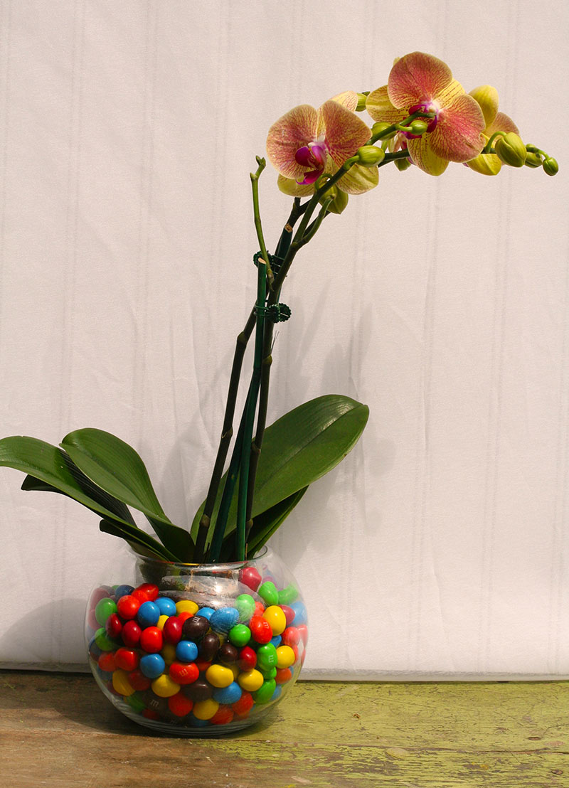 Easy Ways To Dress Up Your Orchids Costa Farms