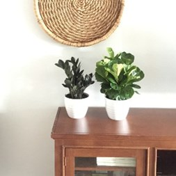 How to Mix and Match Trending Tropicals® Houseplants